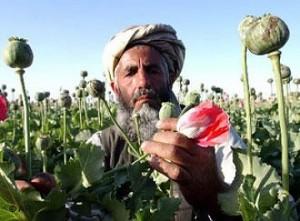 afganistan opio